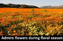 Admire flowers during floral season