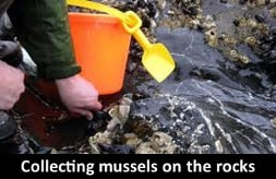 Collecting mussles on the rocks
