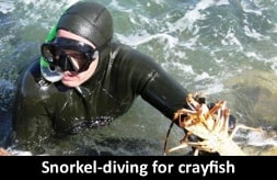 snorkel-diving-for-crayfish